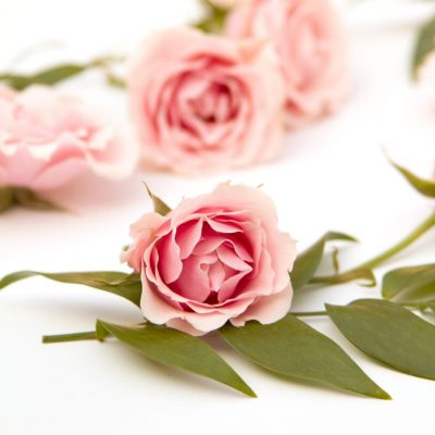 Pretty pink roses enjoy motherhood journey