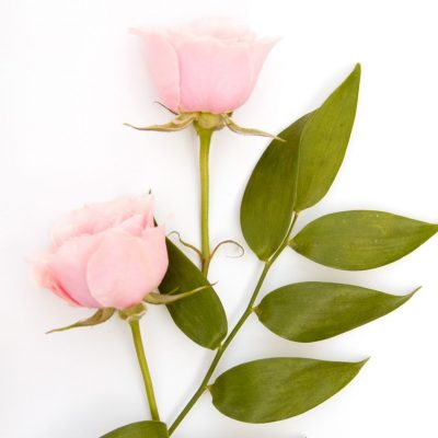 two pink roses motherhood journey is to be enjoyed